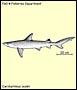 Blackspot shark